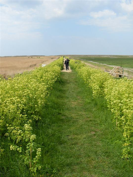 Cley - East bank