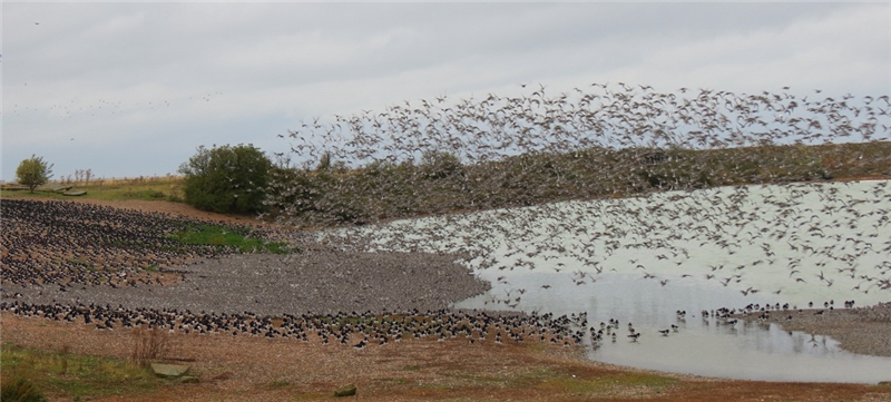 Waders at Snettisham