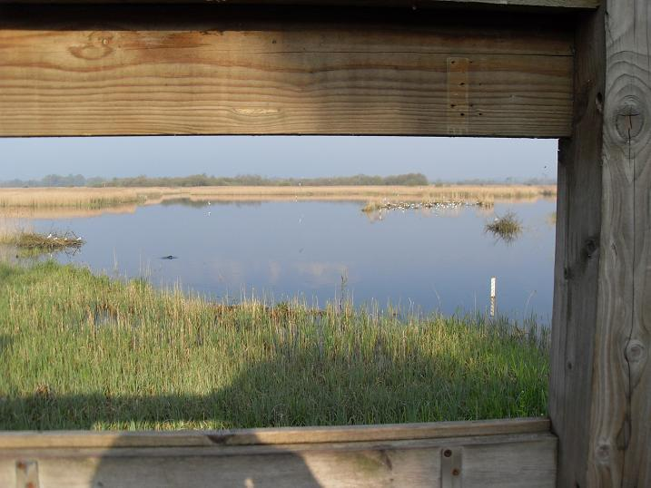 Strumpshaw - view from reception hide