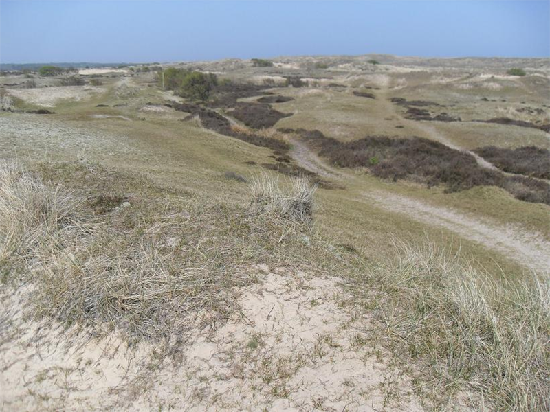 Winterton north dunes