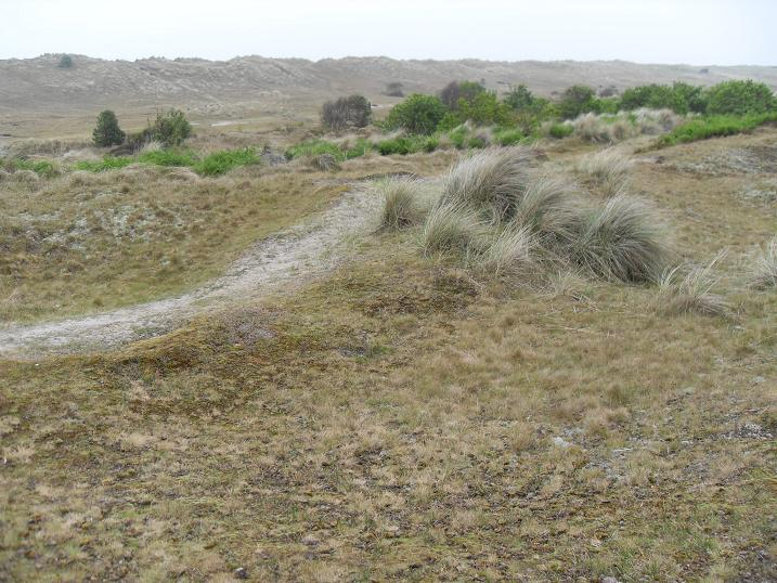 Winterton south dunes
